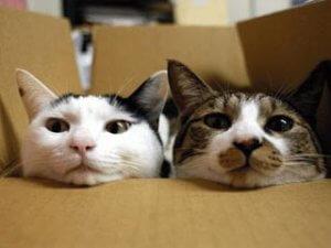 Kat verhuizen 2